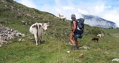 Randonue avec les vaches