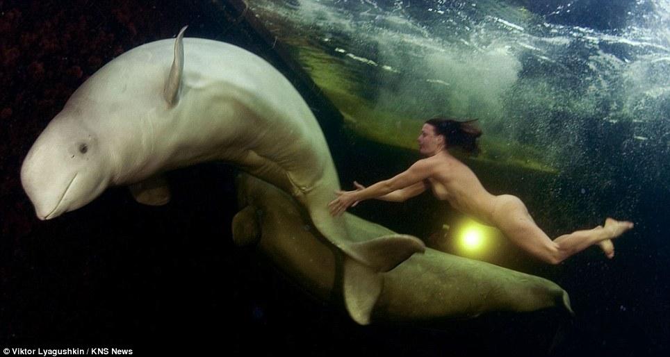 La princesse des baleines, Une femme scientifique nue tente d'apprivoiser des  bélugas en Arctique