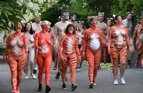streak_for_tigers_various_years_014